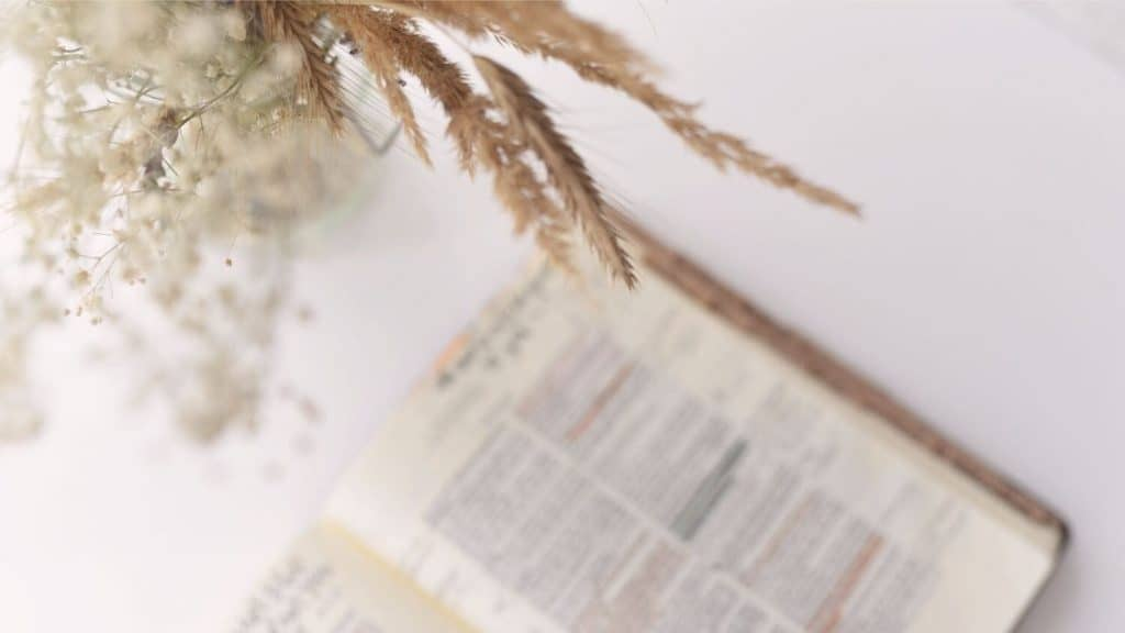 open Bible and a plant