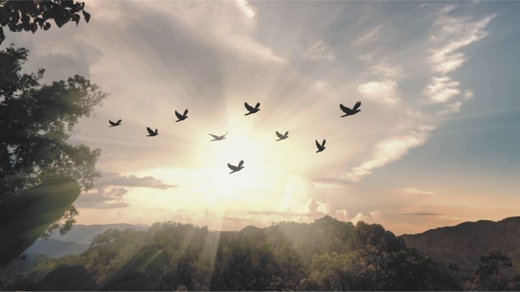 birds flying at sunset